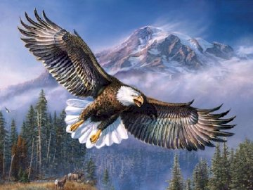 James Meger American bald eagle - James Meger American bald eagle