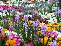 Пролетни цветя.