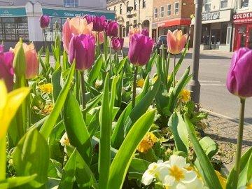 La primavera está en pleno apogeo - La primavera está llena (y cómo no puedes amarla aquí), un pueblo inglés, flores