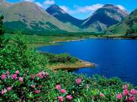 mountains_lake_flowers_slopes_greens_grass_summer_