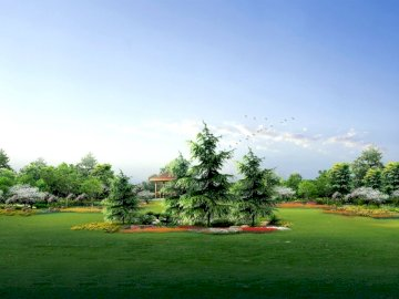 fir trees park garden - fir trees park garden
