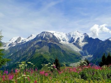 mountains_alps_flowers_tops_freshness - mountains_alps_flowers_tops_freshness