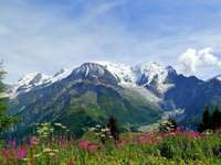 mountains_alps_flowers_tops_freshness