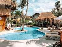 pool, palmer, vila, sommar, tropiker