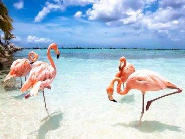 Paradise Aruba - oh oh oh oh oh oh oh oh oh