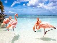 Paradicsom Aruba