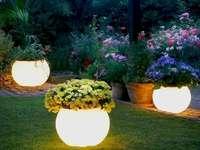 o strânsă grădină de flori