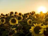 Milovníci slunce