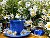 Camomiles, Blue Cup