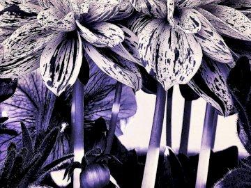 Fleurs stratchatelas - Photographie d'Apolline