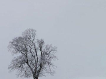 Minimalism - Snow-covered tree. Switzerland