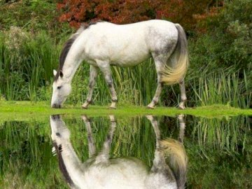 Harmony, nature - A horse in a natural habitat