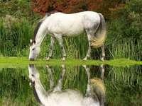Harmonie, příroda