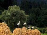 Storks střežit
