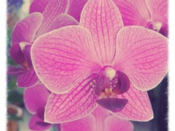 Orchideen - Photographie d'Apolline