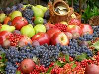 Fructe, Coș