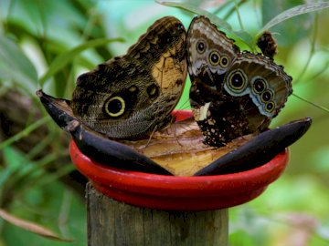 Papillons - Photographie d'Apolline