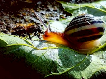 abeille et escargot - Photographie d'Apolline