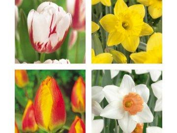 Tulipes et narcisses - Disposez le puzzle sur lequel se trouvent des tulipes et des narcisses