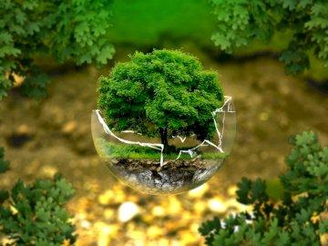 Puzzle Drzewo - Puzzle składają się z trzydziestu elementów