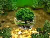 Παζλ δέντρο - Το παζλ αποτελείται από τριάντα στοιχεία