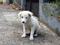 Un cucciolo randagio bianco.