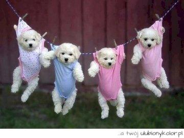 kleine Hunde - Hunde Hunde Hunde Hunde Hunde Hunde Hunde Hunde