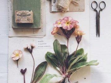 Rosa Estetica - Piccole cose Cose di bellezza