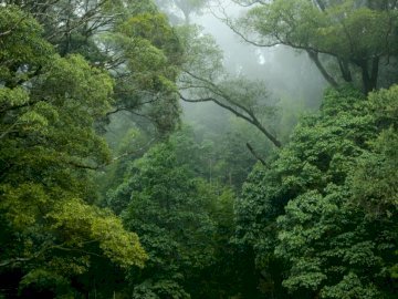 Mountain forest - Green trees covered with fog. China