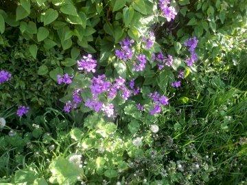 zieleń i kwiaty - poranek z przyrodą :)