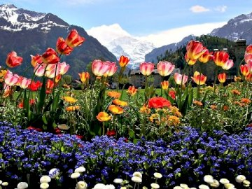 Mountains, clouds and flowers. - Landscape puzzle.