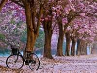 Ruelle, arbres, vélo