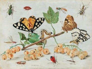Różne gatunki motyli - Puzzle dla dzieci, motyle, zwierzęta