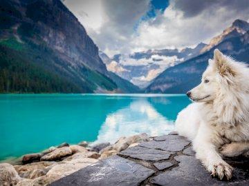 Pies w Kanadzie - Duży, biały pies na wycieczce w Kandzie