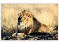 PuzzleLionJulie - This puzzle represents an animal, the lion, which is lying.