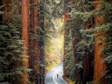 Redwood National Park in Kalifornien - oh oh oh oh oh oh oh oh oh oh oh oh