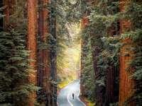 Redwood Nemzeti Park Kaliforniában
