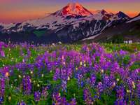 MOUNTAIN LANDSCAPE WITH FLOWERS - THIS IS A BEAUTIFUL MOUNTAIN LANDSCAPE WITH BEAUTIFUL FLOWERS