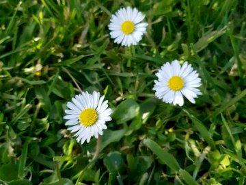 Marie-Do - małe kwiaty w sercu łąki