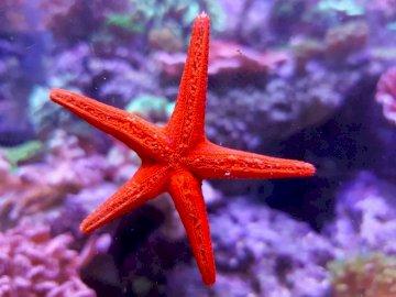 Starfish - Sea adventure with a starfish.