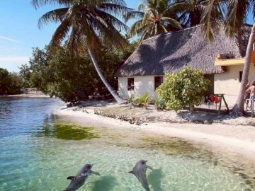 Beauty of nature - Dream vacation under palm trees ;-)