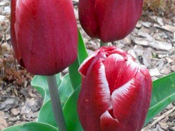 Blooming spring. - Beautiful, blooming, spring flowers.
