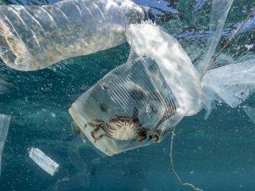 Zanieczyszczone oceany - Puzzle poświęcone ekologii.