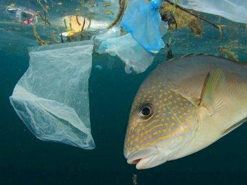 Zanieczyszczone oceany - Ochrona Środowiska - Ekologia