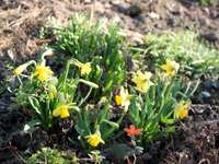 Em vez de piqueniques - quebra-cabeças - A primavera chegou com alegria