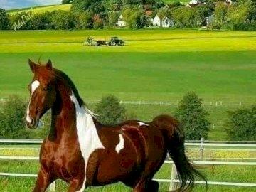Un caballo en el prado. - Rompecabezas: un caballo en el prado.