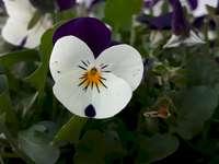 цвете в зеленина