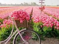 V Nizozemsku