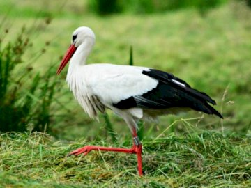 Oiseau  - Vervollständige das Rätsel und rate, welcher Vogel es ist.