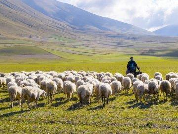 Shepherd and sheep - The good shepherd takes care of his sheep